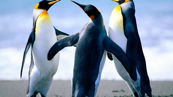upload/34768/20190311/Penguins.jpg